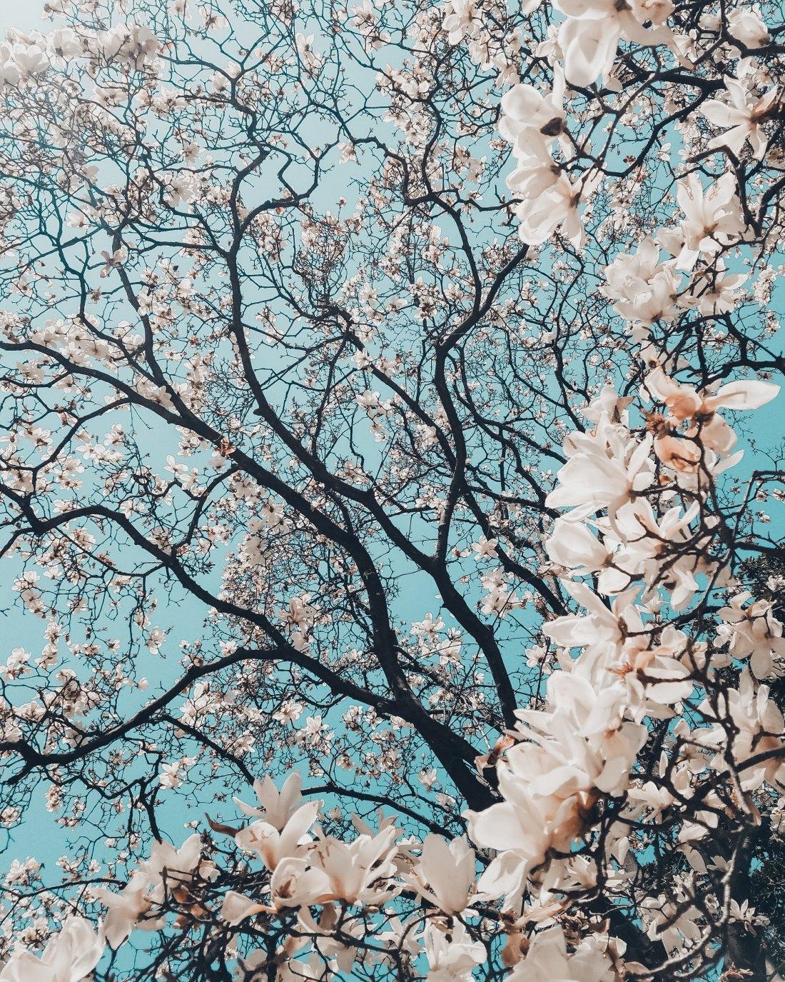 spring time_1.jpg