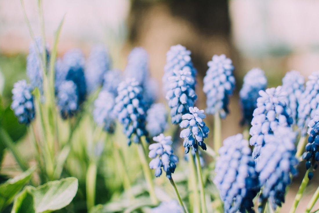 spring time_5.jpg